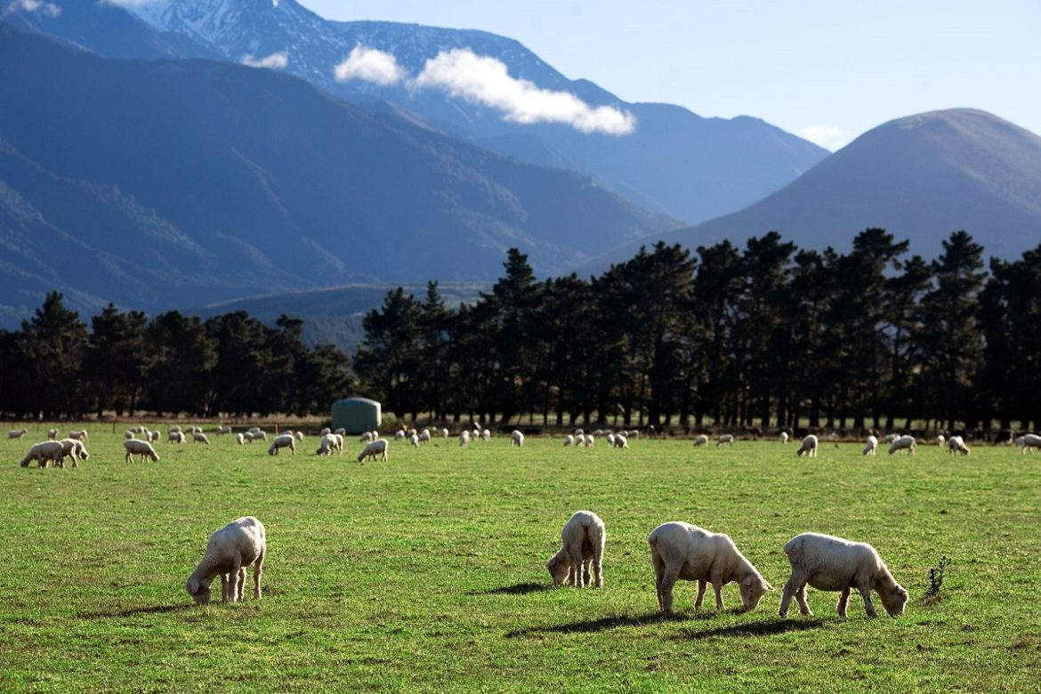https://en.wikipedia.org/wiki/Agriculture_in_New_Zealand#/media/File:New_Zealand_-_Rural_landscape_-_9795.jpg